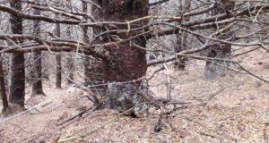 barbed wire trap mtb trail