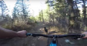 dog vs mountain-biker