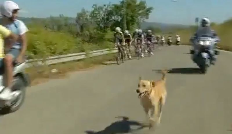 dog in the peloton