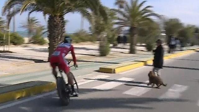 Sagan avoid dog walker tirreno 2017