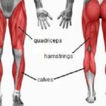 muscles used cycling