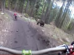 cyclist vs bear