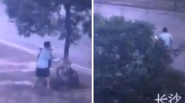 bike thief cuts tree