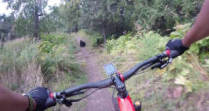 mountain biker bear