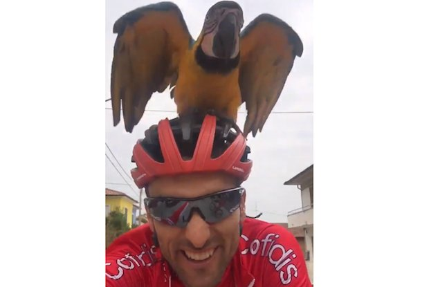 Luis Angel Mate frankie parrot scarponi