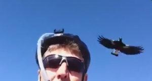magpie swoop helmet