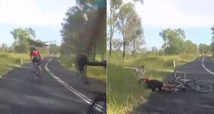 kangaroo cyclist