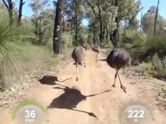 cyclist emus
