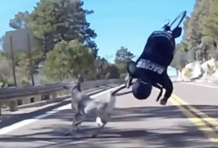Watch: Cyclist collides with deer in scary high-speed crash on descent