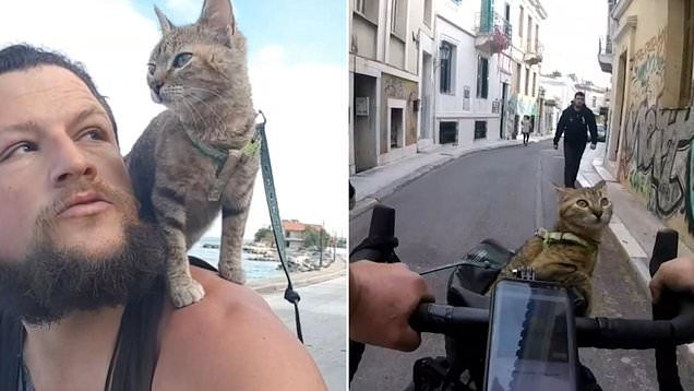 Cyclist adopts stray kitten and now the pair are cycling across world together